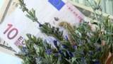 export medicinal plants