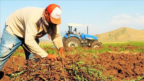 Medicinal Plants in Yazd Has Made 5000 Jobs