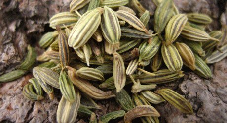 Investment in Standard Seed Production of Medicinal Plants is Necessary